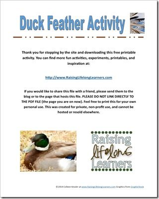 Duck Feather Science for a Gifted or Advanced Preschool Farm Theme #playfulPreschool