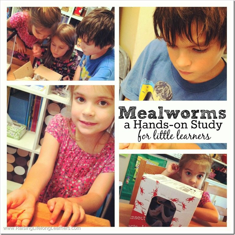 Mealworms Hands-On Unit Study for Kids