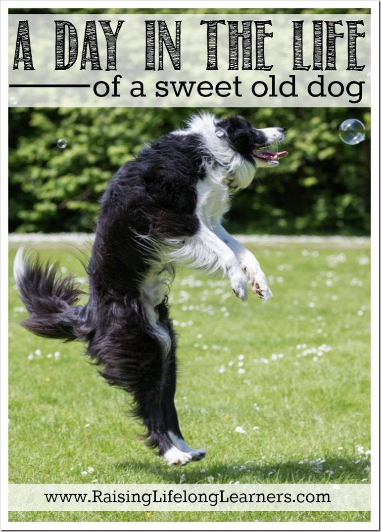 A Day in the Life of an Old Dog #BrightMind [ad]