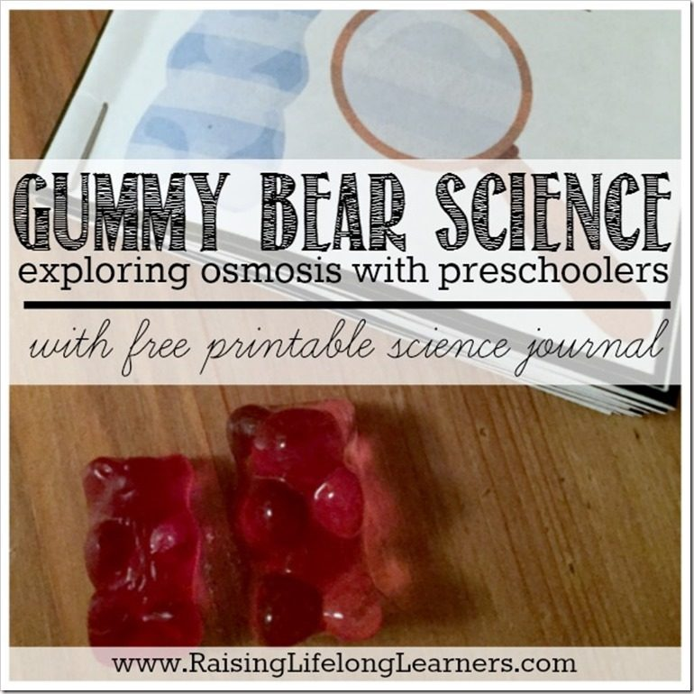 Gummy Bear Science Exploring Osmosis With Preschoolers