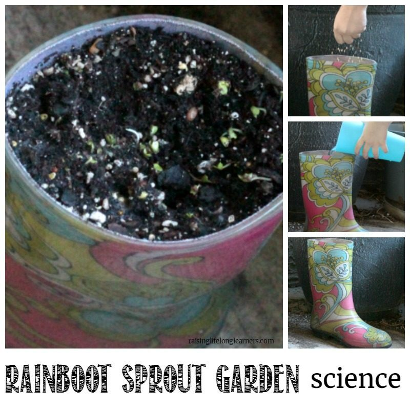 Have old rainboots that no longer fit? Turn them into a rainboot sprout garden to learn all about the seeding process and how to sprout seeds properly!