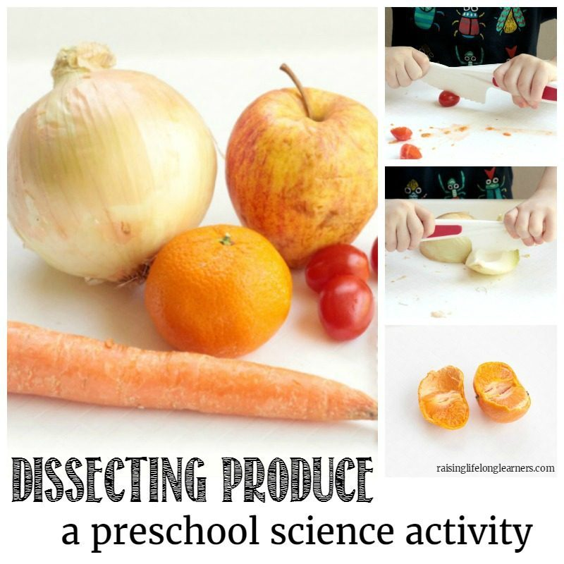 Preschoolers will love learning about the parts of different vegetables in the dissecting vegetables activity. It's a perfect preschool science experiment!