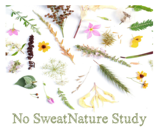 No Sweat Nature Study