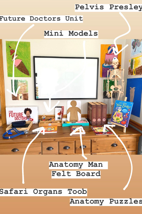 The Best Homeschool Human Body Study Ever